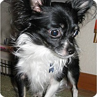 Adopt A Pet :: Rocky - Salem, OR