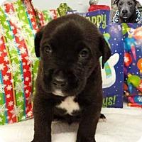 Adopt A Pet :: Trip - Kimberton, PA