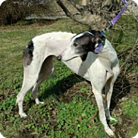 Adopt A Pet :: Wiljac Michelle - Gerrardstown, WV