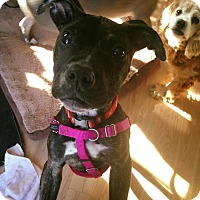 Adopt A Pet :: Didi - Newtown, CT