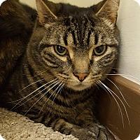 Adopt A Pet :: Betsy - E. Claridon, OH