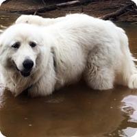 Adopt A Pet :: Chloe Grace - Kyle, TX