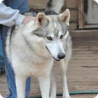 Adopt A Pet :: ZIZOU - Powder Springs, GA