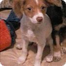 Adopt A Pet :: Logan