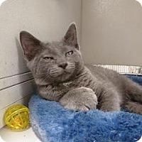 Adopt A Pet :: Anton - Massapequa, NY