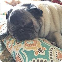 Adopt A Pet :: Sebastian - Alden, NY