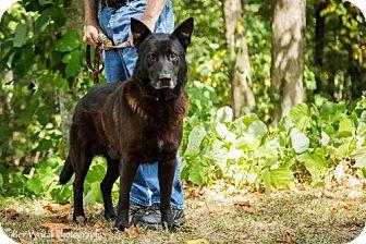 German Shepherd Dog Mix Dog for adoption in Clarkesville, Georgia - Damon