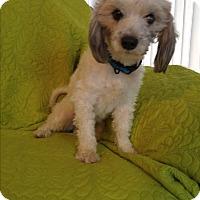 Adopt A Pet :: Rudy - LAKEWOOD, CA