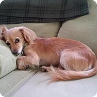 Adopt A Pet :: Figgy - Poughkeepsie, NY
