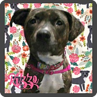 Adopt A Pet :: Rizzo - Des Moines, IA