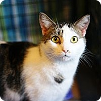 Adopt A Pet :: Wilson- Special Adopt Rate - St. Louis, MO