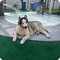 Adopt A Pet :: Simba - Orange Park, FL