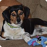 Adopt A Pet :: Gunner - Hamilton, ON