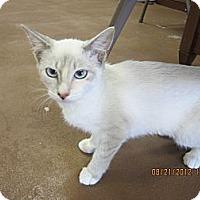 Adopt A Pet :: Sugar - Bunnell, FL