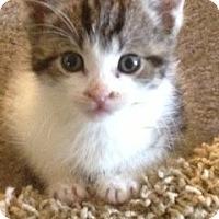 Adopt A Pet :: Miffy - Island Park, NY