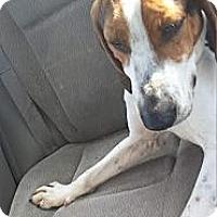 Adopt A Pet :: Gus! - St, Augustine, FL