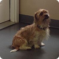Adopt A Pet :: Sherman - Meridian, ID