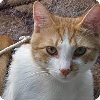 Adopt A Pet :: Gilligan - Duncan, BC