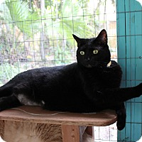 Adopt A Pet :: Margarita - Miami Beach, FL