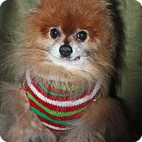 Adopt A Pet :: Paco - Boise, ID