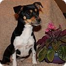 Adopt A Pet :: Broccoli