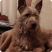 Adopt A Pet :: Choco - San Francisco, CA