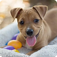 Adopt A Pet :: Keeley - Hialeah, FL
