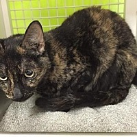 Adopt A Pet :: Bippy - Columbus, OH