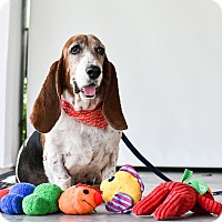 Adopt A Pet :: Daisy - Vancouver, BC