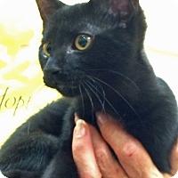 Adopt A Pet :: Nikki - Troy, MI
