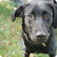 Adopt A Pet :: Elsa - Minneola, FL