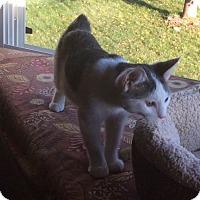 Adopt A Pet :: Thumper - Ogallala, NE