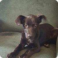 Adopt A Pet :: Noah - New Oxford, PA
