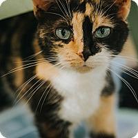 Adopt A Pet :: Daya - Indianapolis, IN