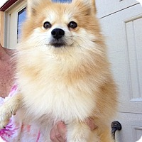 Adopt A Pet :: Reba - Temecula, CA
