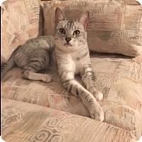 Adopt A Pet :: ROO - Mesa, AZ