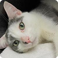 Adopt A Pet :: Jesse - Monroe, MI