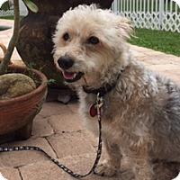 Adopt A Pet :: Wallace - Davie, FL