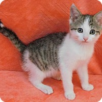 Adopt A Pet :: Taz - Elkhorn, WI