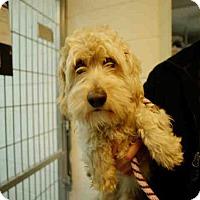 Adopt A Pet :: CHICO - Long Beach, CA