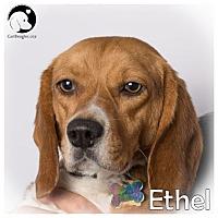 Adopt A Pet :: Ethel - Pittsburgh, PA