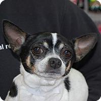 Adopt A Pet :: Escobar - Brooklyn, NY