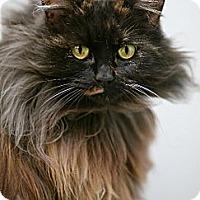 Adopt A Pet :: Olivia - Davis, CA