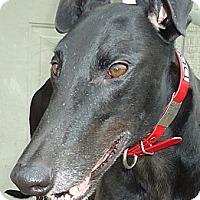 Adopt A Pet :: Dobby - Longwood, FL