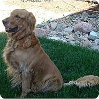 Adopt A Pet :: Quincy - Denver, CO
