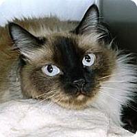 Adopt A Pet :: Winston - Cheyenne, WY