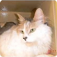 Adopt A Pet :: Lady Jane - Howell, NJ