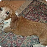 Adopt A Pet :: Guthrie - Phoenix, AZ