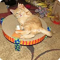 Adopt A Pet :: Bruce Leroy - Edmond, OK