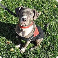 Adopt A Pet :: Jonah - Sacramento, CA